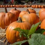 Caregiver Darby PA - Celebrate Fall with Healthy Orange Foods